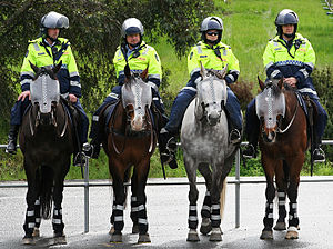 Australian mounted police officers on standby ...